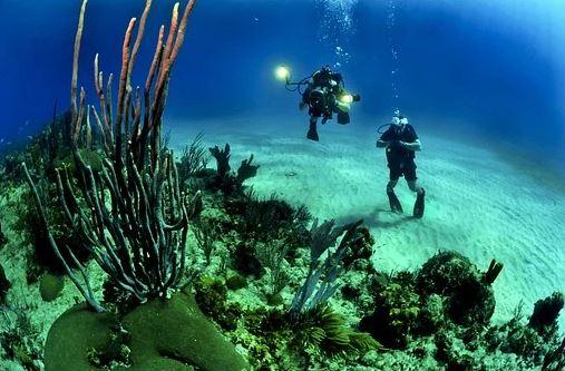 divers-681516__340.webp